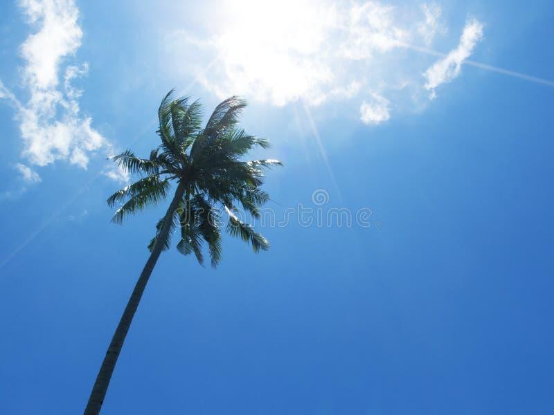 Lang palmsilhouet op blauwe hemel Palmkroon met groen blad op zonnige hemelachtergrond royalty-vrije stock afbeelding