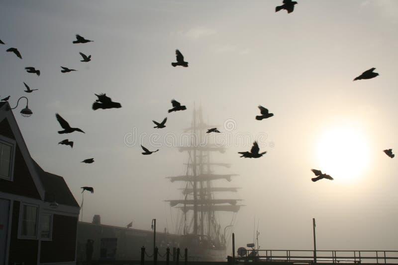 Lang Schip met Vogels stock afbeeldingen