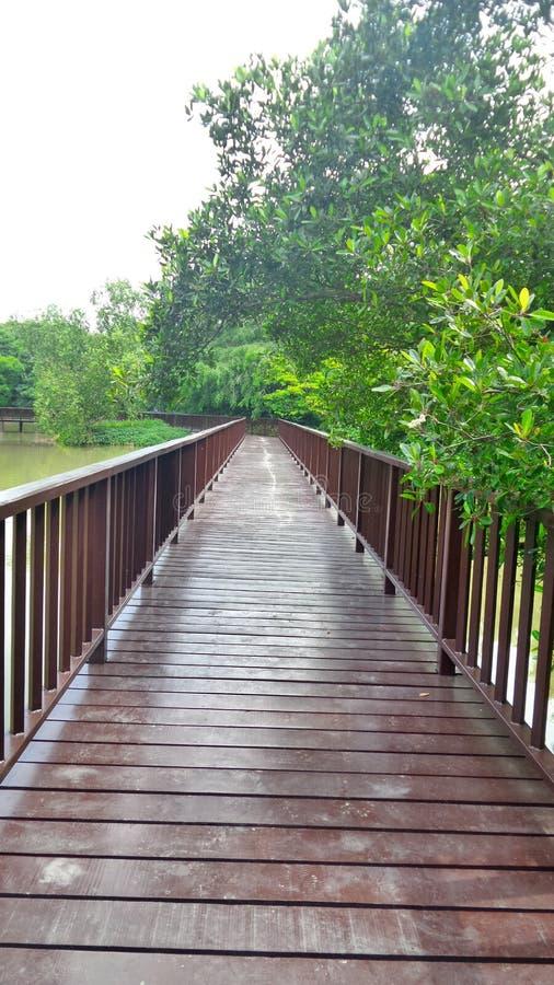Lang woonden de brug van de gangmanier in mangrove groen bij Bangkrachao-gebied stock fotografie