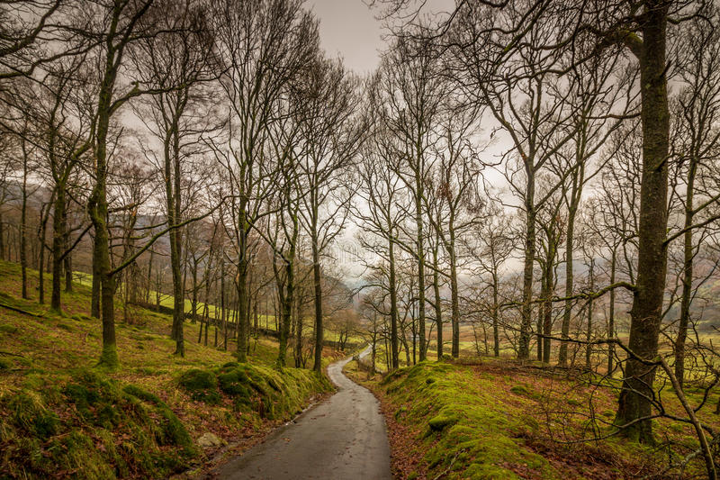 Langdale Valley Footpath. Footpath through the woods in the Langdale Valley, heading towards Oak Howe on a cloudy and gloomy winter afternoon in the Lake royalty free stock photos