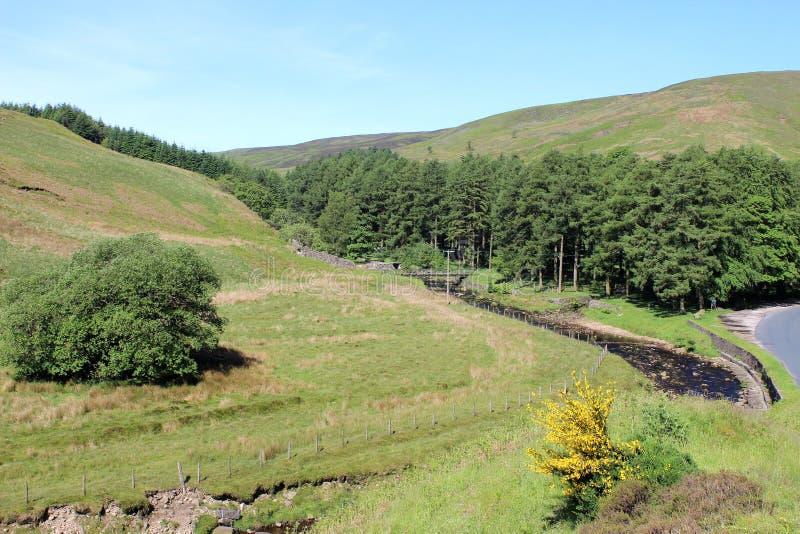 Langden bäck, ho av Bowland, Lancashire royaltyfri fotografi