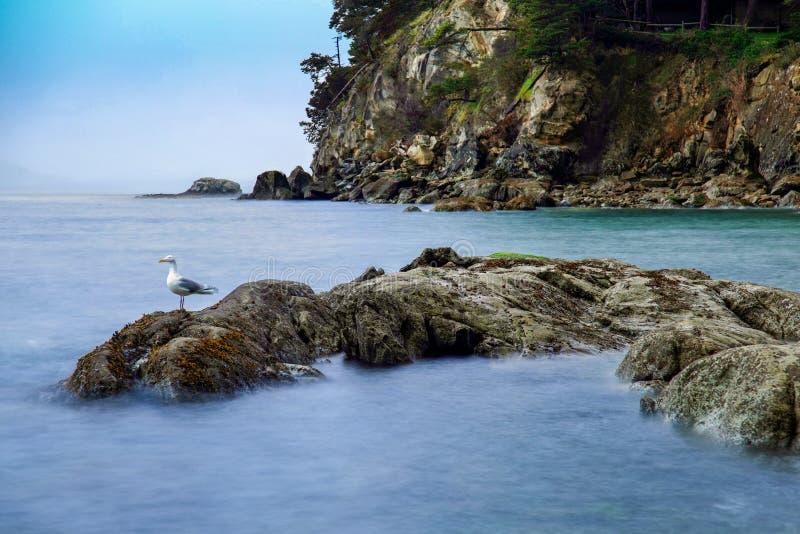 Lange Belichtung von Larrabee-Bucht mit einer Seemöwe auf den Felsen in Bellingham, WA stockfoto