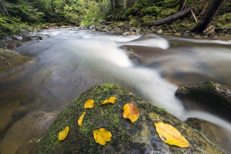 Lange blootstelling die van het kleine snelle vloeien door wilde groene moun wordt geschoten stock foto