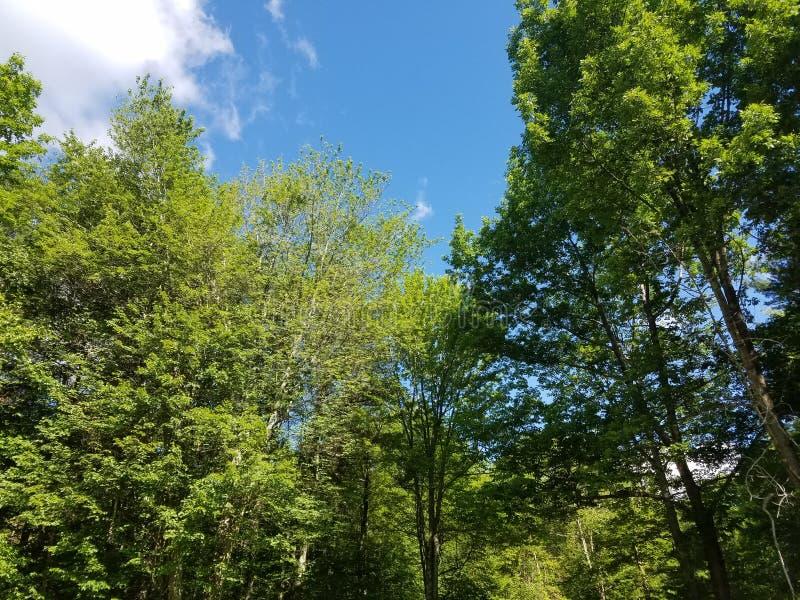 Lange bomen Blauwe hemel stock afbeeldingen