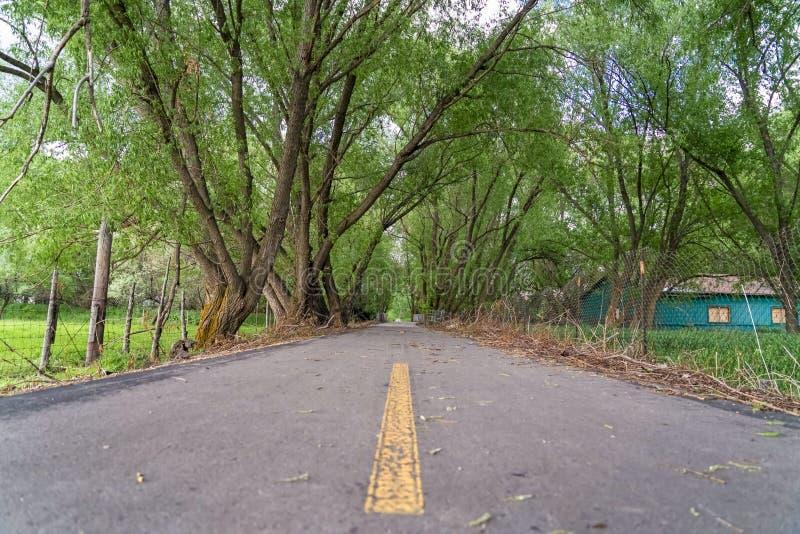 Lange bomen en groene loods langs een smalle bedekte weg met de chian omheining van de verbindingsdraad stock foto
