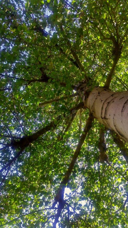 Lange boom stock afbeeldingen