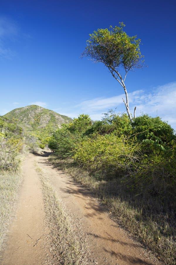 Lange Boom in het Land, Antigua royalty-vrije stock foto's