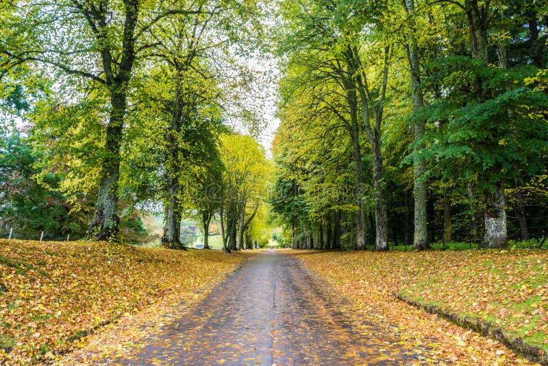 Lange Fahrstraße im Herbst stockbilder