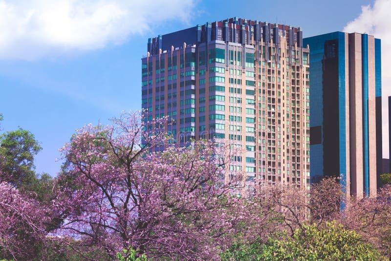 Lange gebouwen met roze bloemen stock afbeelding