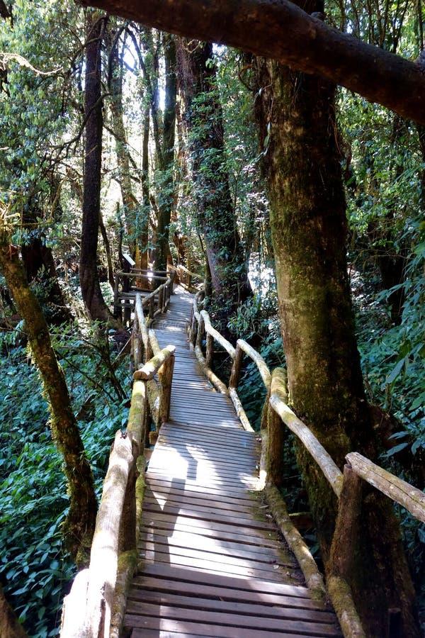 Lange gerade Promenade durch Gebirgswald lizenzfreie stockfotos