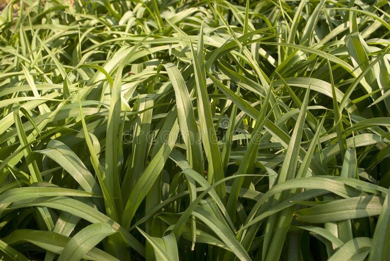 Lange Gras dichte omhooggaand royalty-vrije stock afbeeldingen