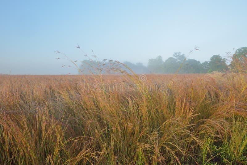 Lange Grasprairie bij Zonsopgang royalty-vrije stock foto