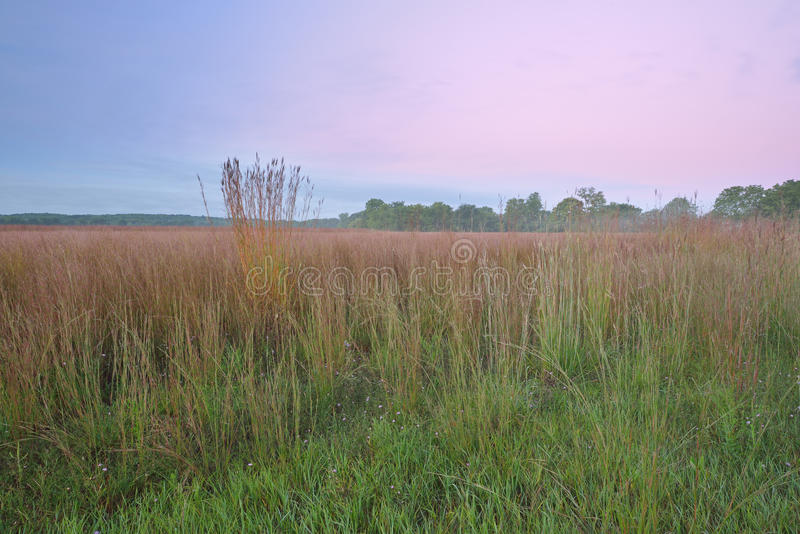 Lange Grasprairie in Dawn stock afbeelding