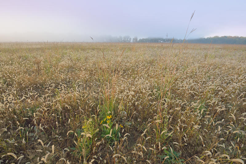 Lange Grasprairie in Dawn stock afbeeldingen