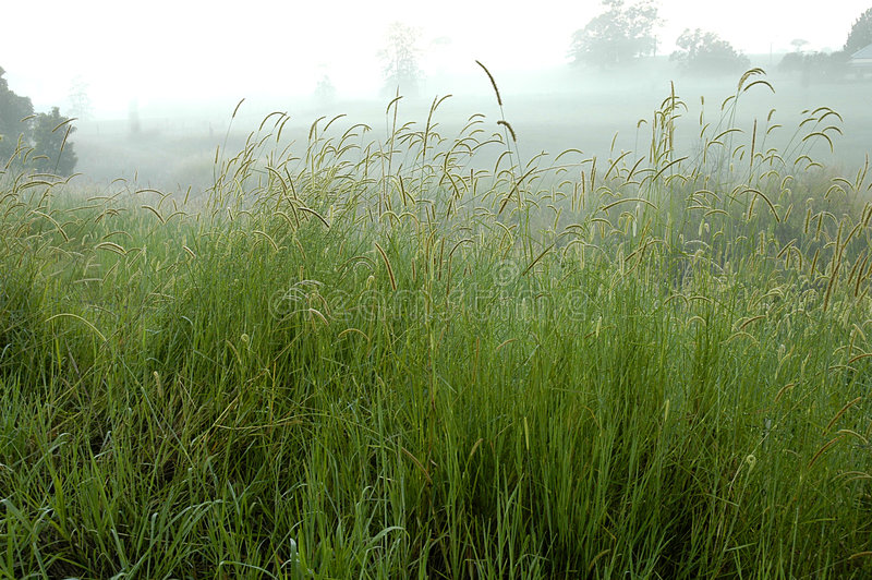 Lange Grassen stock foto's