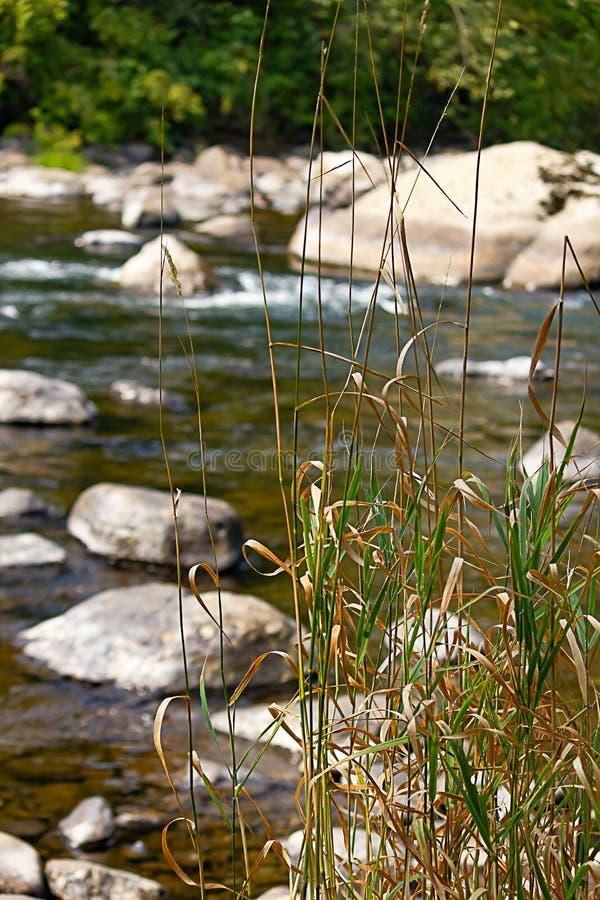 Lange grassen die groen op rand van rivier met keien groeien royalty-vrije stock afbeeldingen