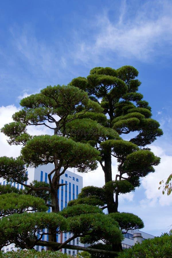 Lange groene Aziatische bomen tegen blauwe hemel met wolkenkrabber op achtergrond stock foto