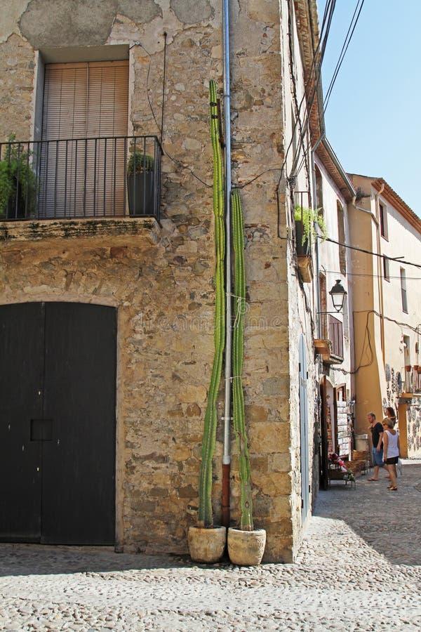 Lange groene cactus die zich dichtbij de voorgevel van het gebouw in Besalu bevinden stock foto's