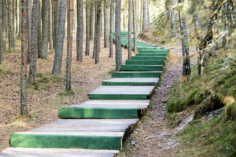 Lange groene houten ladder in het hout als weg stock fotografie
