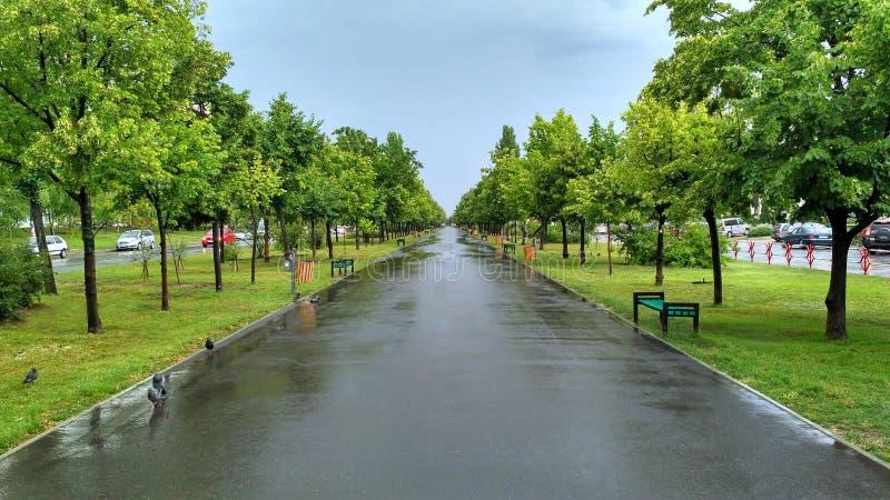 Lange groene steeg na de de zomerregen stock afbeelding