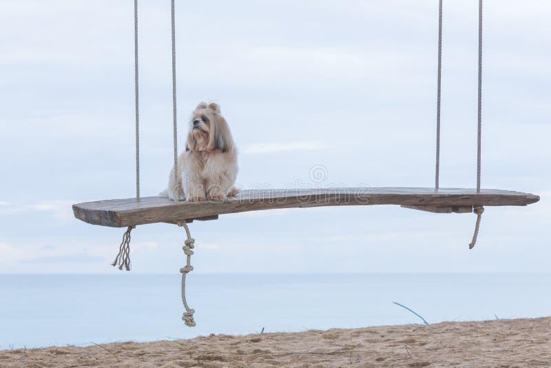 Lange haarhond en overzees stock fotografie