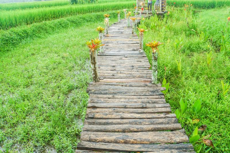 Lange houten brug in groene padieveldhomestay voor vreedzame reis stock foto's
