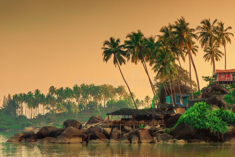 Lange kokosnotenpalmen en rotsachtige kust stock foto's