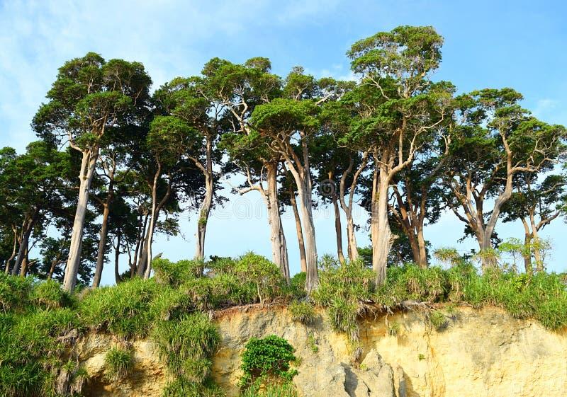 Lange Overzeese Mahua Bomen in Kustbos bovenop Heuvel tegen Blauwe Hemel - Landschap bij het eiland van Neil, de Eilanden van And royalty-vrije stock foto