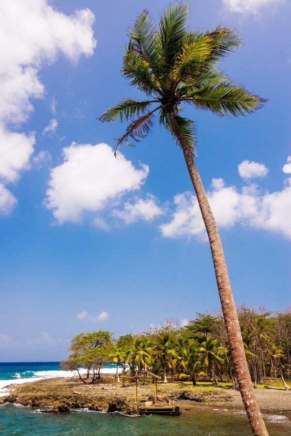 Lange Palm royalty-vrije stock foto's