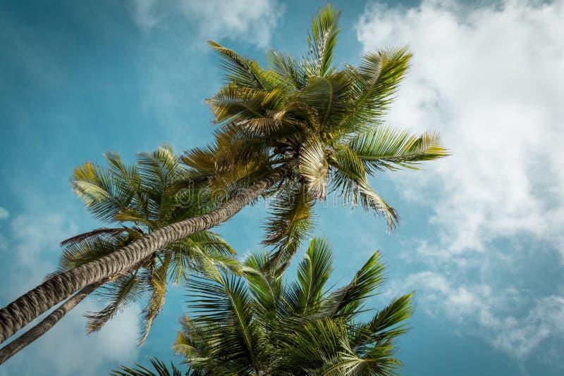 Lange Palmen stock foto's
