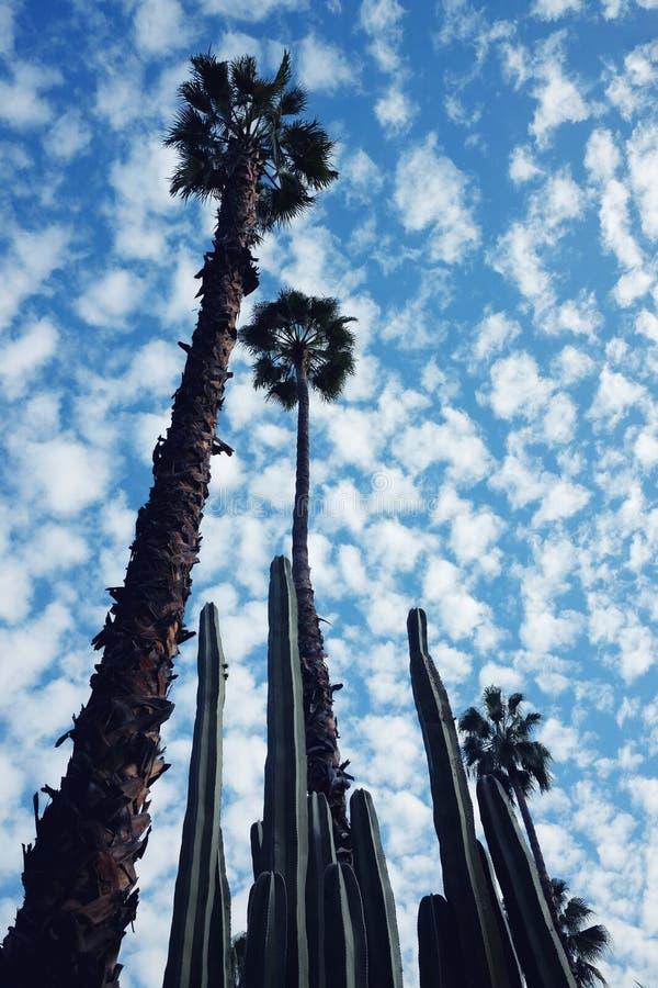 Lange palmen en cactussen in Marrakech royalty-vrije stock afbeeldingen