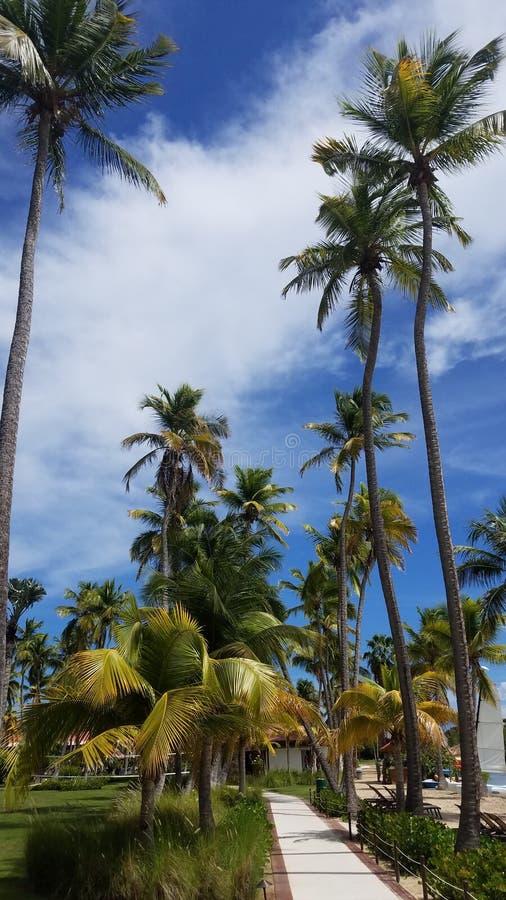 Lange palmen en weg in Guanica, Puerto Rico stock foto's