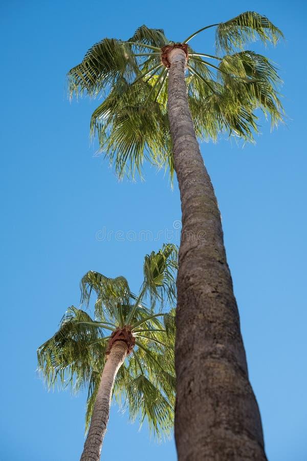 Lange palmen in Piazetta Antonio Panzera in centrum van de historische barokke stad van Lecce in Puglia Italië stock foto's