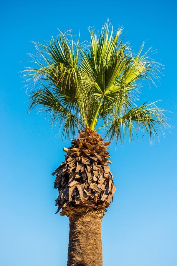 Lange palmen tegen de hemel royalty-vrije stock afbeeldingen