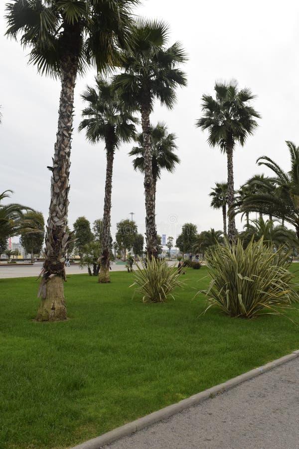 Lange Palmen in Zuidelijke Russische kusttoevlucht royalty-vrije stock afbeelding