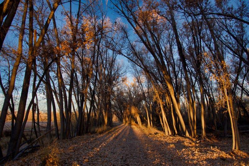 Lange Schatten Langer Weg stockfoto