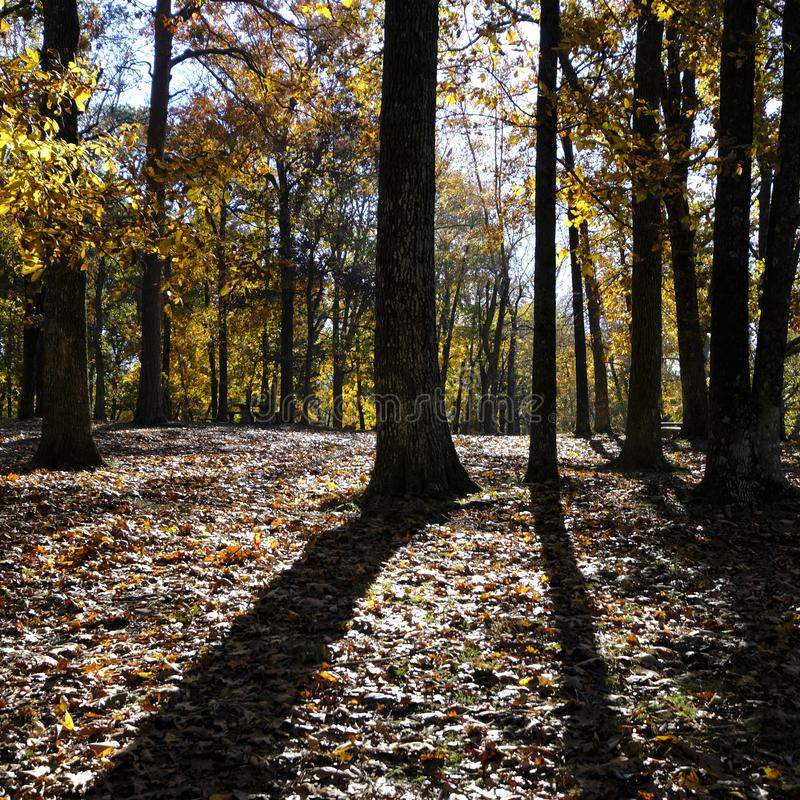Lange Schatten warfen von den zahlreichen B?umen in Autumn Setting stockfotos