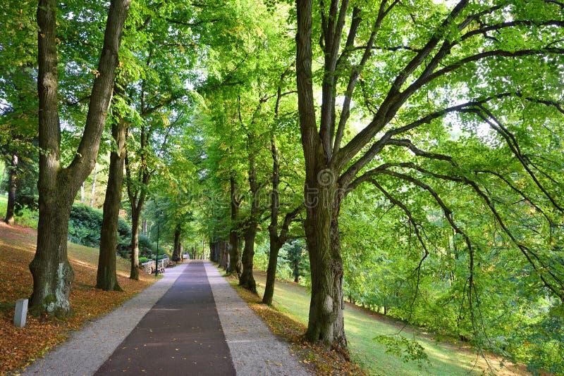Lange steeg van groene bomen royalty-vrije stock foto's