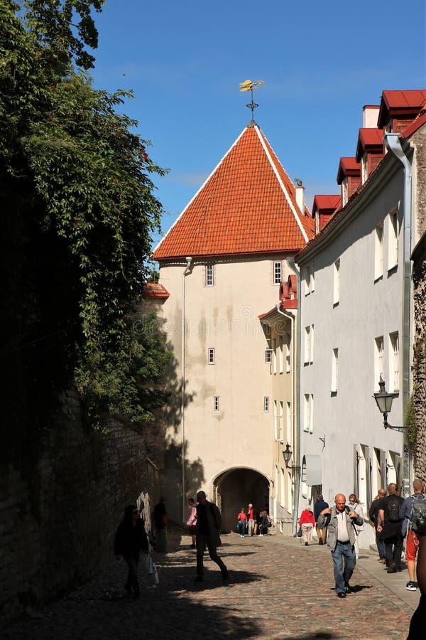 Langer Bein-Tor-Turm, Tallinn, Estland lizenzfreies stockfoto