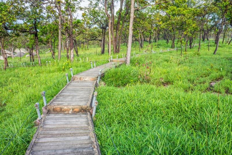 Langer Gehweg an der tropischen Savanne in Thailand stockbilder