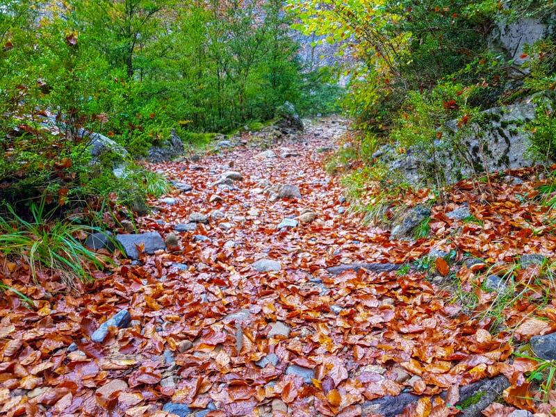 langer schmaler Hintergrundherbstlaub/gelber gefallener Herbstlaub, Hintergrundbeschaffenheit von gefallenen Blättern stockbilder