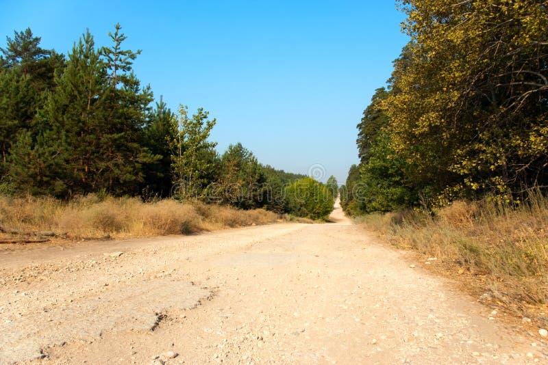 Langer und breiter Waldweg stockbild