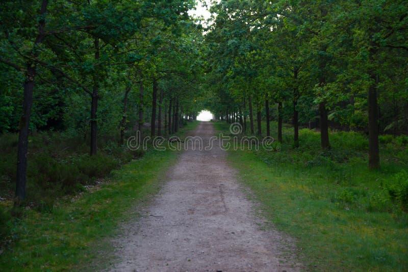 Langer Waldweg führt Sie zum Unbekannten lizenzfreie stockfotografie