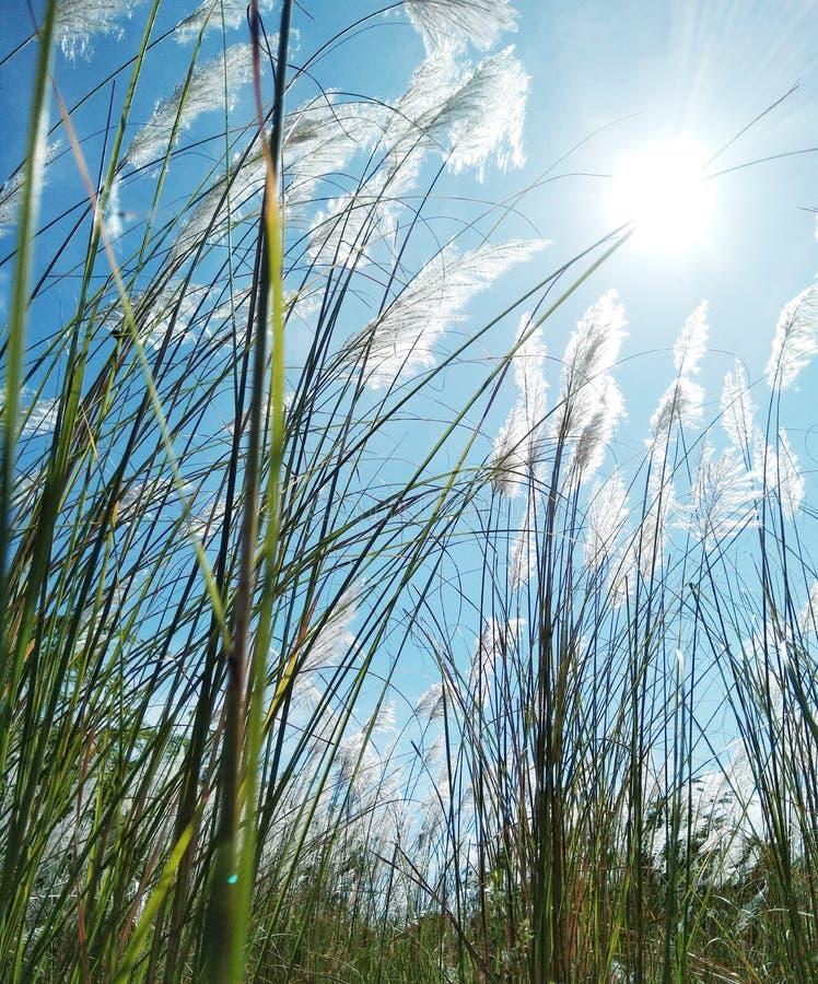 Langes Gras und Sun mit Brise lizenzfreies stockfoto