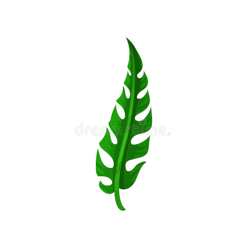 Langes Spalteblatt der tropischen Anlage Natürliches grünes Element Flaches Vektordesign für Postkarte, Einladung oder Fahne stock abbildung