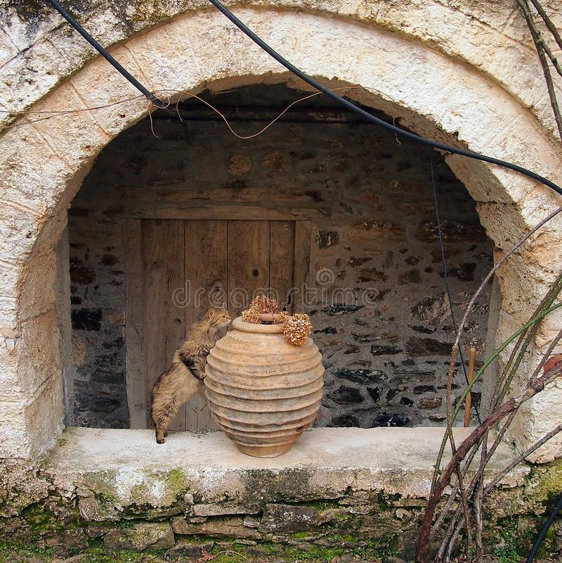 Langharige Cat Inspecting Dried Flower Arrangement in Terracottaurn, Griekenland stock afbeelding