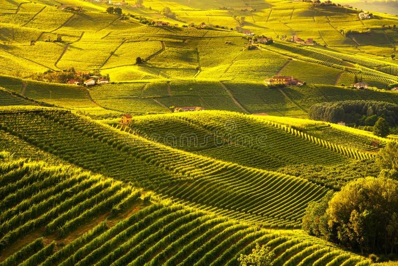 Langhe葡萄园日落全景, Barolo,山麓,意大利欧洲 免版税库存图片