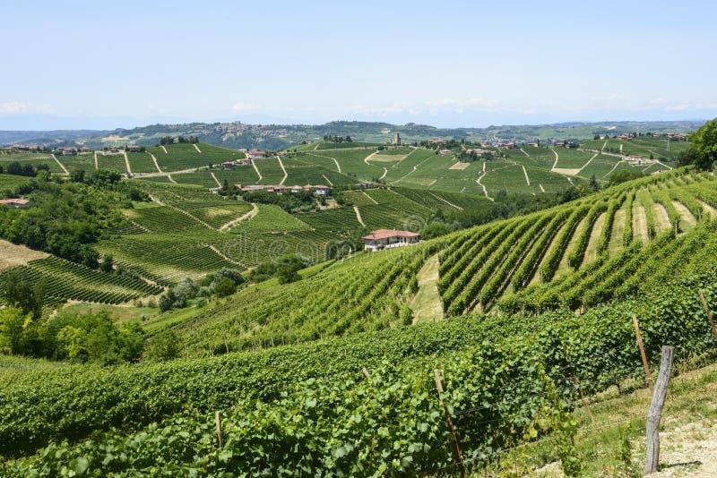 Langhe, виноградники