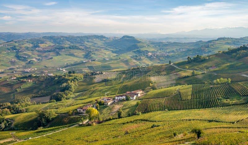 Langhe e Roero winniców wzgórza, Podgórscy, Włochy zdjęcie royalty free