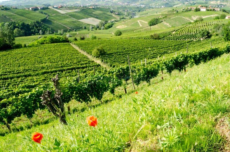 Langhe, górkowaty wino region w Podgórskim, Włochy zdjęcie stock